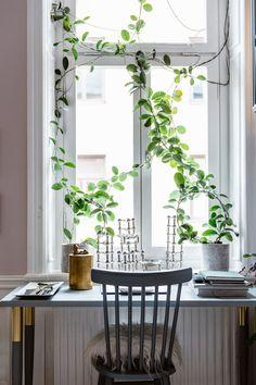 my scandinavian home: Climbing plants in Karolina Modig's home workspace in Stockholm