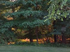 light in the forest # NJ # USA#2014