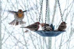 February 3 - Feed the Birds Day