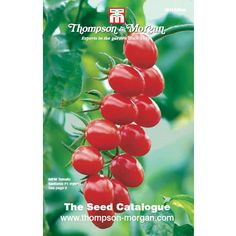 Thompson & Morgan Seed Catalogue - Books - Thompson & Morgan Worldwide