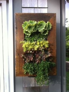 Hey, I found this really awesome Etsy listing at https://www.etsy.com/listing/124551906/vertical-garden