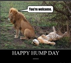 Lmfao! I'm sorry this is too funny, She got did!!!...Happy Humpday peeples!!! ~3/4/2015~
