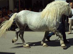 Posavina horse - breed developed in Posavina region - Croatia