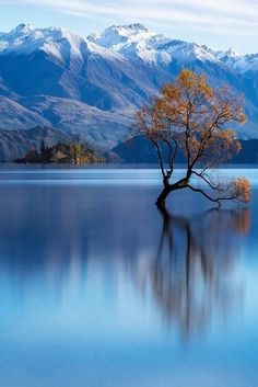 """""""Lake Wanaka,New Zealand"""" Beautiful Nature Wallpaper, Beautiful Landscapes, Beautiful Images, Image Nature, Unique Trees, Photo Backgrounds, Science And Nature, Nature Pictures, Amazing Nature"""