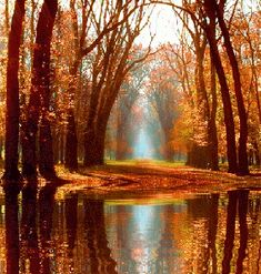 The perfect Nature Beautiful Nerko Animated GIF for your conversation. Discover and Share the best GIFs on Tenor. Autumn Scenery, Autumn Nature, Gif Bonito, Beau Gif, Garden Waterfall, Living Water, Fall Wallpaper, Beautiful Gif, Gif Animé