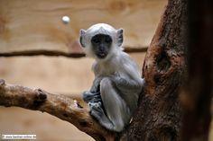Das kleine Affenhaus | Zoo Heidelberg