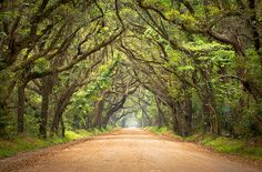Tree Tunnel Kauai, on the way to our friend, Bruce Sakimae's house in Lihue, Kauai, Hawaii.
