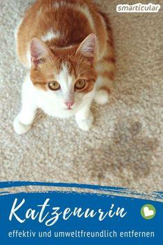 Dog Urine, Pet Odors, Best Carpet Cleaning Solution, Best Carpet Stain Remover, Pet Carpet Cleaners, Pet Odor Eliminator, Pet 1, Dog Pee, Odor Remover