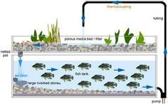 Aquaponics-System-graphic