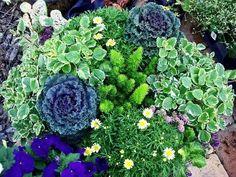 Plant Combinations .....