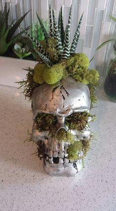 Skull planter for my air plants Skull Decor, Skull Art, Skull Planter, Gothic Garden, Deco Floral, Gothic Home Decor, Gothic House, Indoor Plants, Air Plants