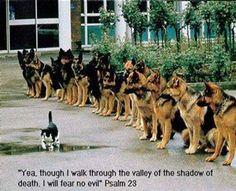 get it! mauvais chat! tuer les espèces ignoble! go go go go