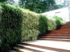 Hairly Green Wall at silver tower ,Singapore By Greenhouse Design & Build Pte Ltd