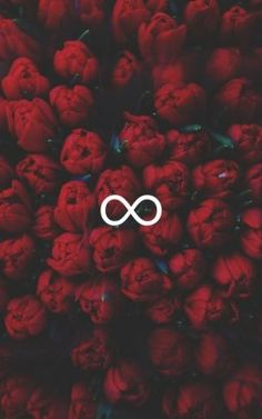 Infinite with red roses wallpaper Flower Wallpaper, Screen Wallpaper, Wallpaper Quotes, Cute Backgrounds, Cute Wallpapers, Wallpaper Backgrounds, Hipster Wallpaper, Iphone Wallpapers, Iphone Red Wallpaper
