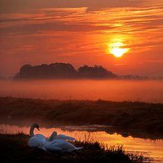 llbwwb:  Swans At Dawn (by DolliaSH)
