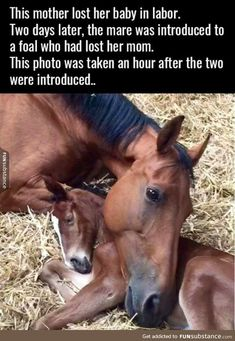 Such a sweet story!