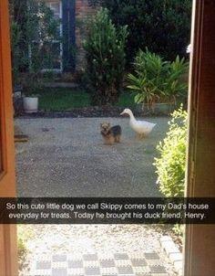 funny animals (4)