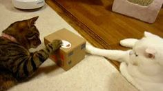 Interactive Cat Toy. Pop up Cat In Box..   Cat tries to catch paw as it comes out!! Lots of Fun!! cat stuff, cat products for cats, cat toys