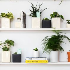 Plants for days at #TheOasis our space at 55 W. 19th in #nyc that's been outfitted by @TheSill #breatherinc  #thesillxbreather by breatherinc