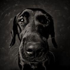 Just a dog portrait