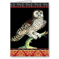 Canadian Owl With Baroque Damask Backdrop Greeting Cards
