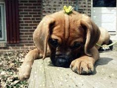 Where's my flower