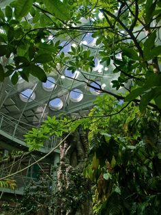 On Sundays you can find me docenting at the California Academy of Sciences.