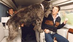 Check out more images from our Presidential Dogs slideshow: http://natl.re/1eZJpBb