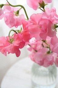 You never need a REASON for pretty pink flowers.