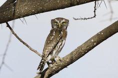 Birds :: Paul Joynson-Hicks Wildlife Photography