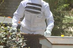 9 Tips After the First Year of Keeping Bees-Tillys Nest Blog-Grit Magazine