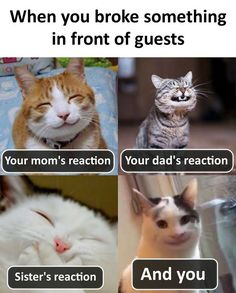If you are not ready to laugh at these memes don't click. Best 22 Funny Memes So True. Funny Cartoon Memes, Latest Funny Jokes, Very Funny Memes, All Meme, Funny Animal Jokes, Funny School Memes, Cute Funny Quotes, Cute Funny Animals, Funny Relatable Memes