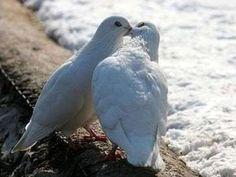 Imagenes del amor en animales - Taringa!