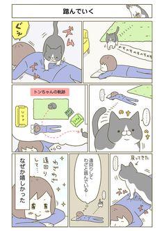 【期間限定!毎日連載】「うちの猫がまた変なことしてる。」第5話