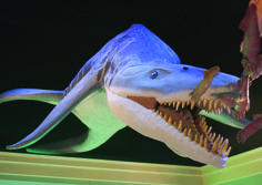 The Mayborn Museum features a natural science and cultural history that focuses on Central Texas with walk-in dioramas including one on the Waco Mammoth Site, and exploration stations for geology, paleontology, archaeology and natural history.
