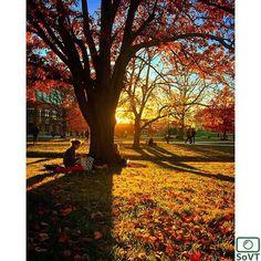 Vermont  ✨ Photographer  @ianmchale✨  #ScenesofNewEngland  Pic of the Day  11.04.15 ✨ C o n g r a t u l a t i o n s ✨  #scenesofVT  #burlingtonVT #igvermont #instauvm  #vermont_potd  #UVM #universityofvermont #vermont_fallfoliage #fallatuvm  #vermont_explore #explorevermont #travelvermo...