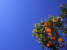 Geen sinaasappel zo lekker als die uit de Algarve.