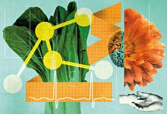 Lesson Plan   Analyzing Vegetarian Meals - NYTimes.com