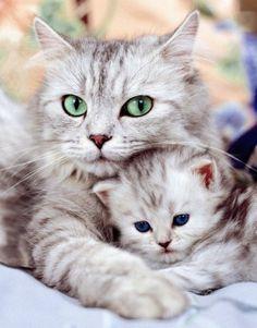 Cat Kitten Wallpaper