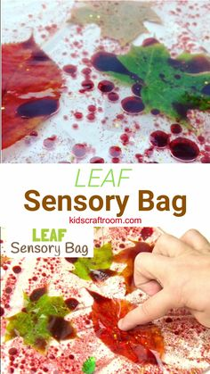 LEAF SENSORY PLAY BAGS - a fantastic mess free Fall sensory play activity for kids. This sensory play idea lets kids natural leaves in a fun and interesting way. A Fall activity for toddlers and preschoolers. Such a fun Autumn sensory play idea. Fall Activities For Toddlers, Toddler Learning Activities, Infant Activities, All About Me Activities For Preschoolers, Sensory Activities For Toddlers, Sensory Play For Babies, Fall Art For Toddlers, Sensory Activities For Preschoolers, Outside Activities For Kids