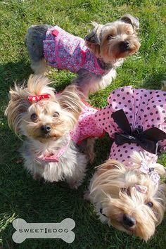Nouvelle collection de harnais pour chiens -