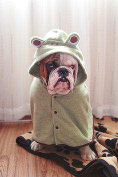 Hahaha, so cute! Why do I love bulldogs so much?!