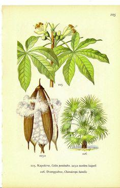 Botanical Prints Ceiba