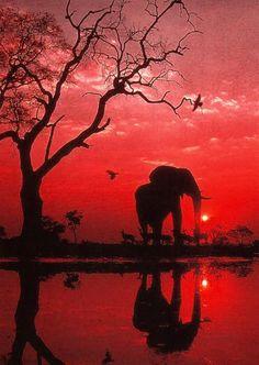 Radiant African sunset! BelAfrique your personal travel planner - www.BelAfrique.com