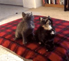 "Cue music… TURN DOWN FOR WHAT! | These Kittens Jamming Out To ""Turn Down For What"" Will Make Your Day"