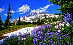 Find the best Wallpaper Spring Nature Scenes on GetWallpapers. We have background pictures for you! Free Spring Wallpaper, Frühling Wallpaper, Wallpaper Computer, Trendy Wallpaper, Spring Landscape, Landscape Photos, Mount Rainier, Nature Photo Wallpaper, Mountain Wallpaper