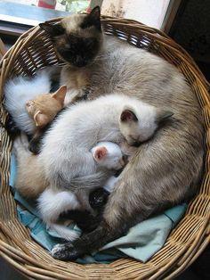 12 lieve kittenfamilies! - Hart voor Dieren