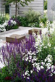 Lavendel (och något vitt)-rabatt