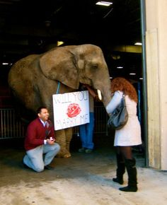 Let an elephant pop the question, if she is a animal lover!