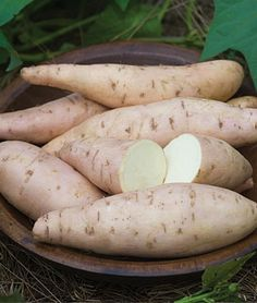 Sweet Potato, Bonita.  I started to order items for my garden this year